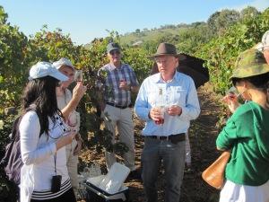 Vineyard Old Vine Tour 1